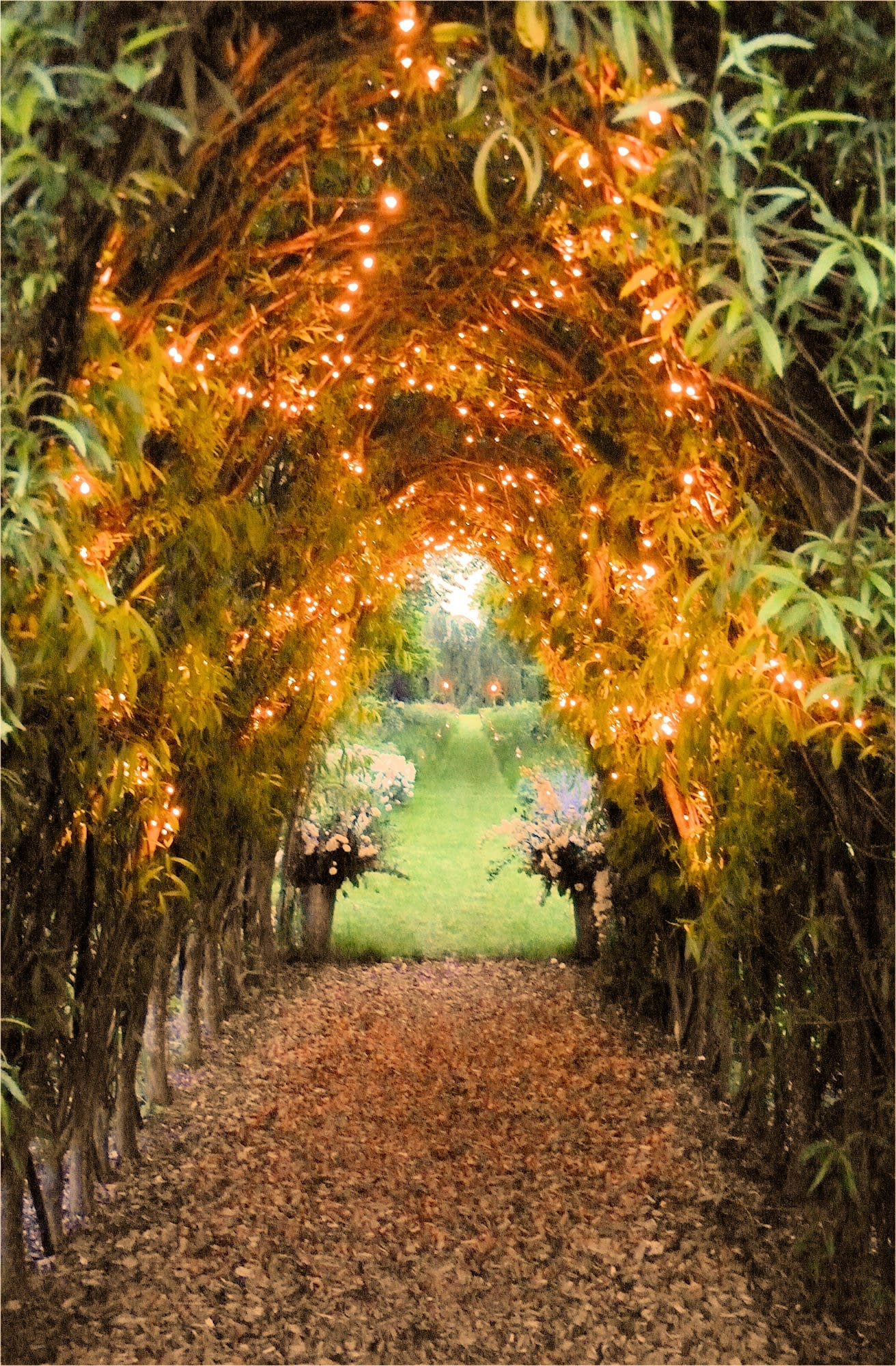 Fairy lights in bushes to create an illuminated walkway at Chaucer Barn, UK wedding venue